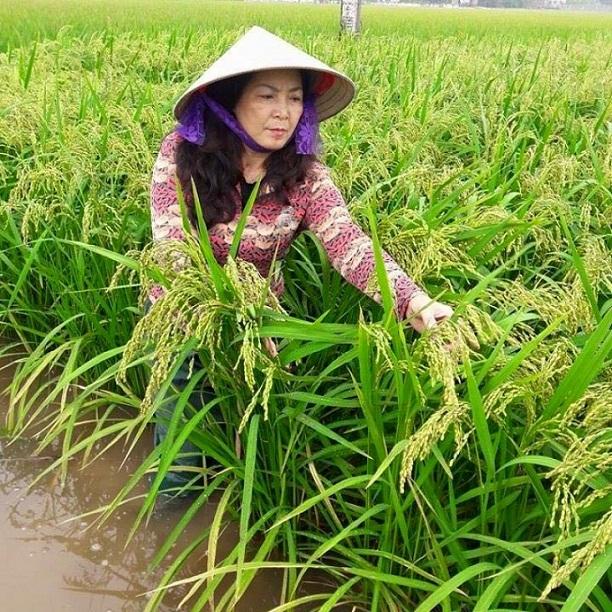 Bà Nguyễn Thị Ánh Tuyết