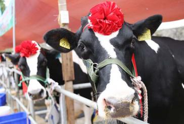 Nắm giữ Sữa Mộc Châu, GTN trở thành mục tiêu thâu tóm của các ông lớn ngành hàng tiêu dùng?